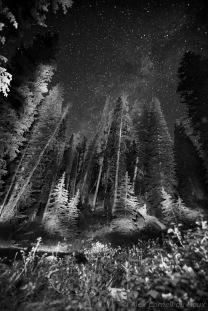 Alex Cornell du Houx Phogography-26